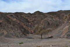 Formations de roche intéressantes en parc de Timna, désert du Néguev, région sauvage en Israël du sud, Eilat image stock