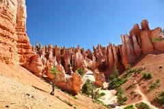 Formations de roche renversantes et pins de ponderosa en Bryce Canyon National Park Photos stock