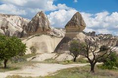 Formations et arbres de roche en vallée blanche Image libre de droits