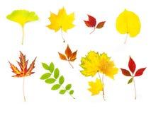 Formato differente dei fogli/XXLarge di autunno Fotografia Stock Libera da Diritti