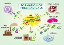 Formazione di concetto di radicali liberi Clipart editabile e jpg Fotografie Stock
