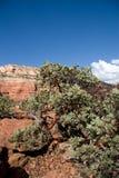 Formazione rocciosa e Manzanita Immagini Stock Libere da Diritti