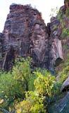 Formazione rocciosa ed alberi di Zion Fotografia Stock