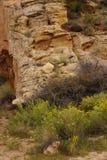 Formazioni rocciose sedimentarie del dettaglio immagini stock libere da diritti