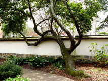 Forme abstraite d'arbre photo libre de droits