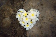 Forme blanche de coeur de plumeria Photo stock