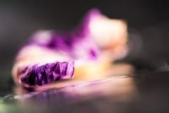 Forme dalla natura - petalo rosa Fotografia Stock Libera da Diritti