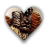Forme de coeur complètement de cônes de pin Image stock