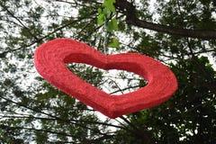 Forme de coeur d'amour attachant sur un arbre Images stock