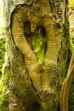 Forme de coeur d'amour sur un arbre Photos libres de droits