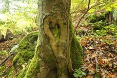Forme de coeur d'amour sur un arbre Images stock
