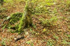 Forme de coeur d'amour sur un arbre Photographie stock libre de droits