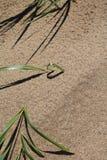 Forme de coeur d'herbe et d'ombre Photo stock