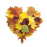 Forme de coeur des feuilles en baisse Photos libres de droits
