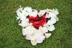 Forme de coeur des pétales de rose sur le fond d'herbe Images libres de droits
