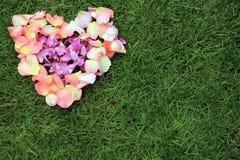 Forme de coeur des pétales de rose sur le fond d'herbe Copiez Spac Photographie stock