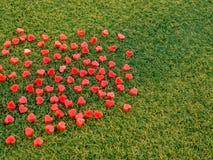 Forme de coeur faite à partir de la bougie sur l'herbe artificielle Images stock