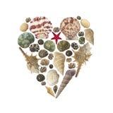 Forme de coeur faite de coquilles d'isolement Image libre de droits