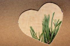 Forme de coeur vue par feuilles photos libres de droits