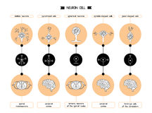 Forme de corps cellulaire de neurone Images libres de droits