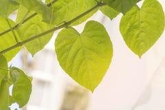 Forme de feuille verte de coeur pour le jour du ` s de Valentine, épousant avec le fond de nature Images stock