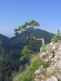 Forme de vue la montagne de Sokolica Image stock