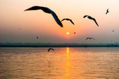 Forme del gabbiano al tramonto a Varanasi Fotografie Stock Libere da Diritti