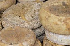 Forme del queso condimentado Imagenes de archivo