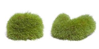 Forme dell'erba Fotografia Stock Libera da Diritti