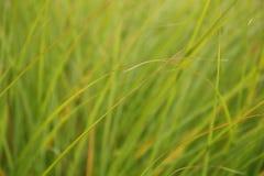 Forme dell'erba Fotografia Stock