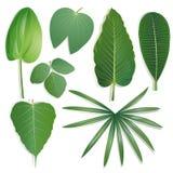 Forme différente de l'ensemble 2 de feuilles Photo libre de droits