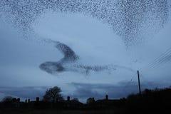 Forme nel cielo Fotografia Stock