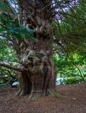 Forme peu commune d'arbre Photos stock