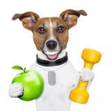 Forme physique et chien sain Photographie stock libre de droits
