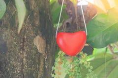 Forme rouge de coeur de cintre accrochant sur l'arbre vert avec le fond de lumière du soleil dans le style de vintage Orientation Photographie stock libre de droits
