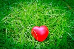 Forme rouge de coeur sur l'herbe, métaphore abstraite de fond à seul Photo libre de droits