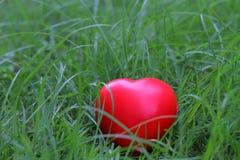 Forme rouge de coeur sur l'herbe, métaphore abstraite de fond à seul Image stock