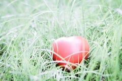 Forme rouge de coeur sur l'herbe, métaphore abstraite de fond à seul Photographie stock