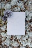 Forme vide, papier chiffonné sous les pieds dans les bois Images stock
