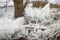 Icicles on reed on the downwind side of a lake near Rotterdam, The Netherlands. stock photos