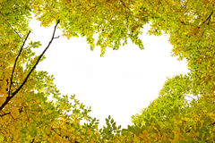 Formed the heart of autumn leaves and branches trees Royalty Free Stock Images