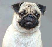 Formeel portret Royalty-vrije Stock Afbeelding