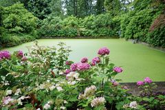 Formeel Vijver en Tuinlandschap stock afbeelding