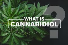 Formel Cannabidiol CBD, Marihuanablätter, wachsender Hanf Indica, Hintergrundgrün, Bearbeitungshanf, Hanf CBD lizenzfreie stockfotografie
