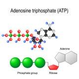 Formel för ATP för Adenosinetriphosphate strukturell vektor illustrationer