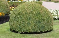 Formele Tuin Stock Afbeelding