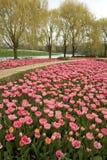Formele tuin van roze tulpen Stock Afbeeldingen