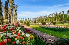 Formell blommaträdgård Arkivbilder
