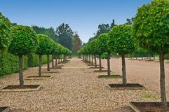 formell trädgårds- lindensslott för aveny Royaltyfria Foton
