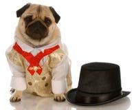 formell wear för hund Arkivbilder